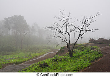 dry tree in fog