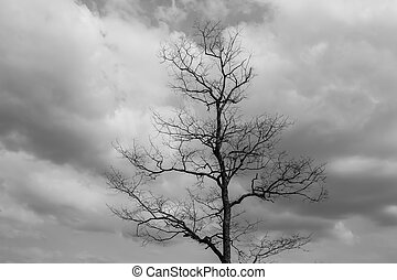 dry tree in nature
