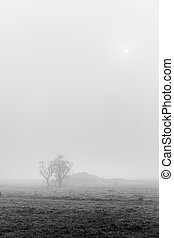 Dry tree in the mist, detail from a tree in the field, cold...