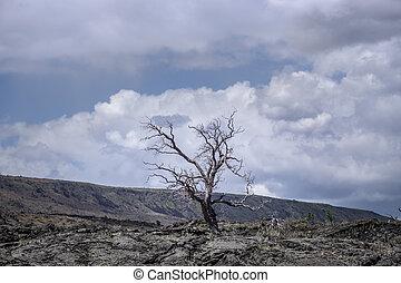Dry tree in volcanic landscape on Hawaii island