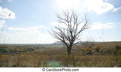 Dry tree lonely in the field on a background of blue sky autumn nature