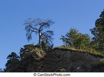 Dry tree on a background of blue sky