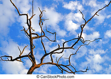 dry tree on a background of the sunny sky with clouds