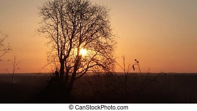 dry tree on a sunset background.