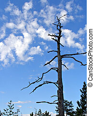dry tree on background blue sky