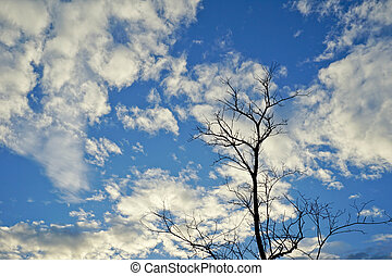 Dry tree on blue sky background