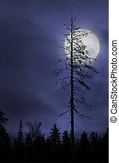 dry tree on dark sky with moon