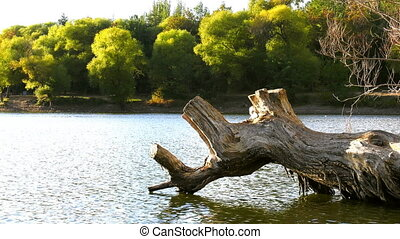 Dry Tree on Lake