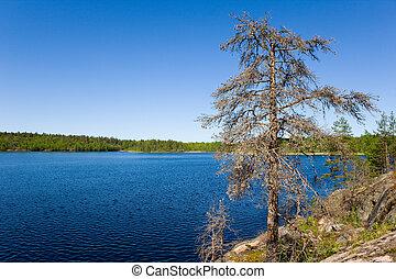 Dry tree on rocky coast of lake
