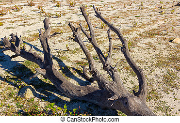 Dry tree on the shore of a lake