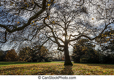 Dry tree silhouette in a morning