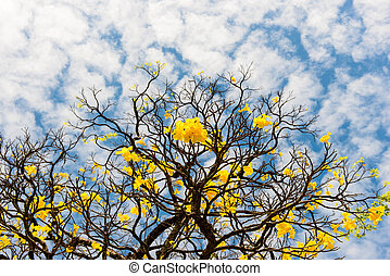 dry tree with yellow flowers