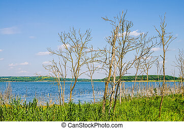 Dry trees growing next to a river