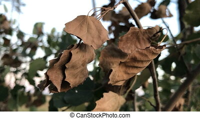 withered leaves of a tree in the forest - dry withered...