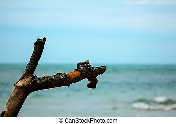 Dry wood with the sea