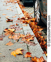 Dry yellow autumn leaves on the city sidewalk