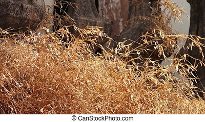 Dry yellow grass - A shallow depth of field shot of dry...