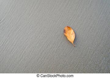 Dry yellow leaf on sand