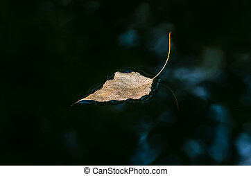 Dry yellow leaf on the water