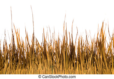 Dry yellow thatched grass on white background