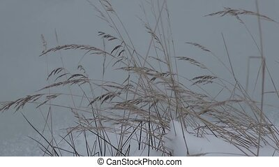 Dry yellow wild grass in winter. Slow motion video.