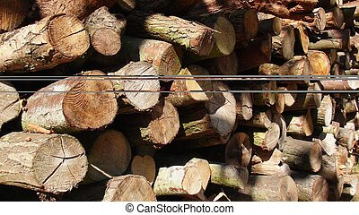 Drying Coppice - Drying coppice in the forrest waiting for ...