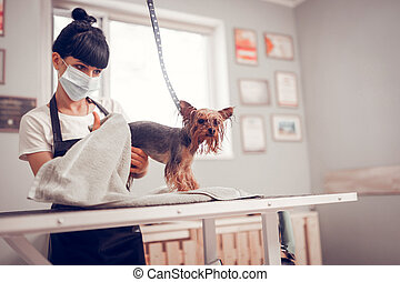 Woman wearing mask and apron drying cute dog after washing