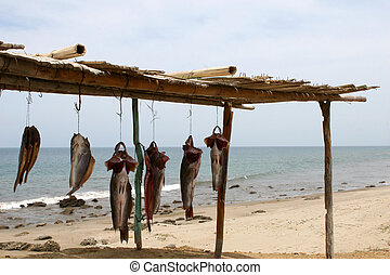 Drying Fish - Fish drying in the sun on the beach in Peru