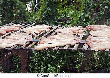 Drying fish in Cambodia