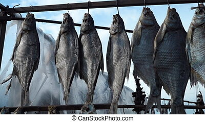 Drying fish under the sun