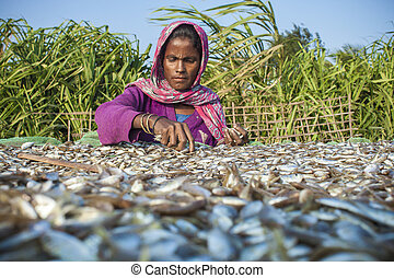Drying fish worker - The southernmost part of Bangladesh St...
