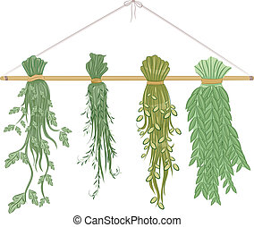 Drying Herbs - Illustration Featuring Herbs Being Dried