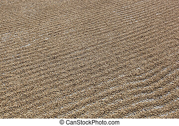 The drying of coffee beans in courtyard of Naranjillo cooperative in Tingo Maria,