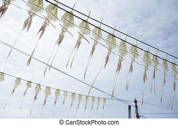 Drying squid with blue sky