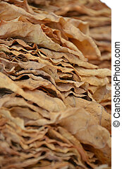 Drying tobacco leaves