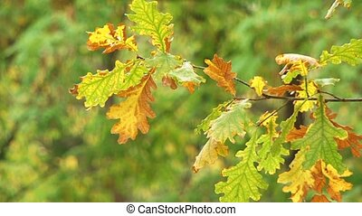 Drying Up Leaves