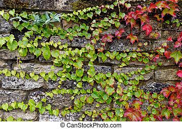 drystone, burford, pared, cotswolds, vegetación