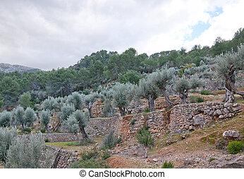 drystone, terrazas, árboles