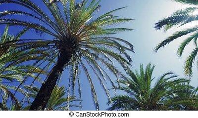 drzewa, dłoń, brzeg, tropikalny