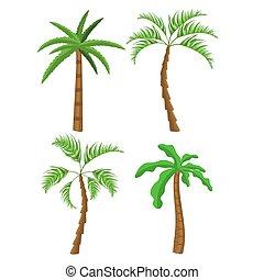 drzewa., tropikalny, dłoń