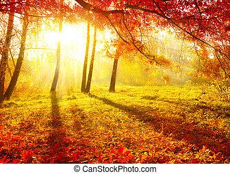 drzewa, upadek, jesień, jesienny, leaves., park.