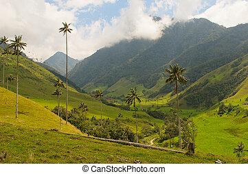 drzewa, vax, dłoń, cocora, kolumbia, dolina