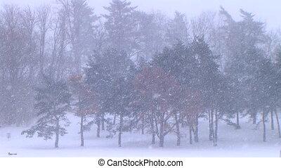 drzewa, w, śnieżyca