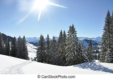 drzewa, w, niejaki, śniegowy krajobraz
