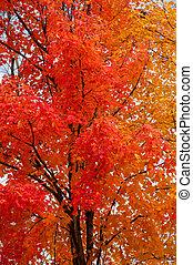 drzewa, w, spaście kolor