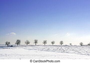 drzewa, w, zima