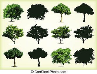 drzewa., wektor, zielony, zbiór, ilustracja