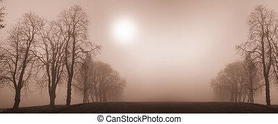 drzewa, zima