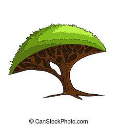 drzewo, afrykanin
