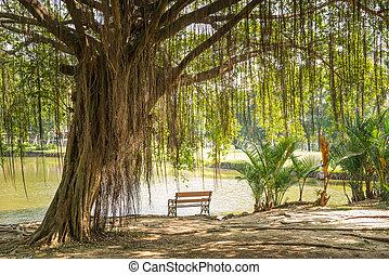 drzewo, banyan